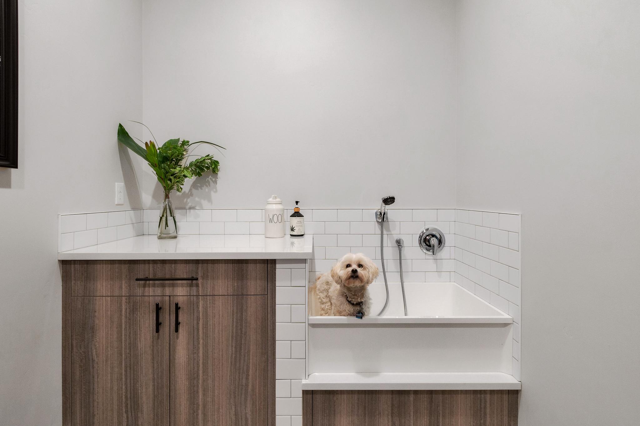 cv 9 dog shower utility room